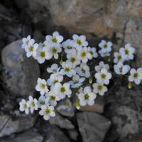 fiori6