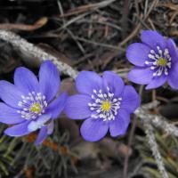 fiori7