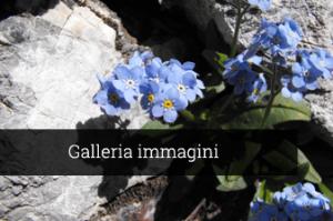 Galleria immagini Meublé Rosalpina Valdidentro